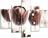 Glasschilderij Tulp | Bruin, Wit | 100x70cm 5Luik | Foto print op Glas |  F005114