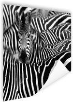 Zebra zwart-wit  Poster 60x40 cm - Foto print op Poster (wanddecoratie)
