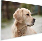 Een schuin kijkende Golden Retriever Plexiglas 90x60 cm - Foto print op Glas (Plexiglas wanddecoratie)