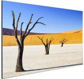 FotoCadeau.nl - Boompjes in woestijn Aluminium 60x40 cm - Foto print op Aluminium (metaal wanddecoratie)