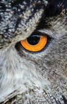 The Hacker-Proof Internet Address Password Book - Owl Eyes