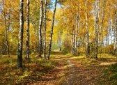 Papermoon Autumn Forest Vlies Fotobehang 500x280cm 10-Banen