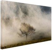 Eenvoudige boom in de mist Canvas 30x20 cm - Foto print op Canvas schilderij (Wanddecoratie)