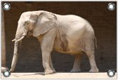 Tuinposter –Zuid-Afrikaanse Olifant– 90x60 Foto op Tuinposter (wanddecoratie voor buiten en binnen)
