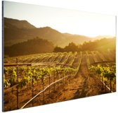 Wijngaard bij zonsondergang Aluminium 180x120 cm - Foto print op Aluminium (metaal wanddecoratie) XXL / Groot formaat!