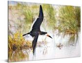 Zwarte Schuimspaan tijdens de vlucht tegen een achtergrond van water en gras Aluminium 80x60 cm - Foto print op Aluminium (metaal wanddecoratie)