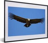Foto in lijst - Een Andescondor met gespreide vleugels fotolijst zwart met witte passe-partout klein 40x30 cm - Poster in lijst (Wanddecoratie woonkamer / slaapkamer)