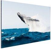 FotoCadeau.nl - Walvis springt achterover in blauw water Aluminium 120x80 cm - Foto print op Aluminium (metaal wanddecoratie)