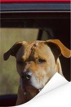 Een Staffordshire Bull Terrier in een rode auto Poster 80x120 cm - Foto print op Poster (wanddecoratie woonkamer / slaapkamer) / Huisdieren Poster