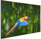 Vliegende ara  Aluminium 60x40 cm - Foto print op Aluminium (metaal wanddecoratie)