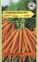 Oranjeband - Zomerwortel Evora F1