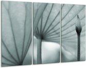 Glas schilderij Bloem | Grijs, Groen | 120x80cm 3Luik | Foto print op Glas |  F006431