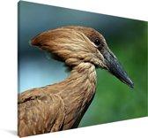 Close-up van de hamerkop Canvas 180x120 cm - Foto print op Canvas schilderij (Wanddecoratie woonkamer / slaapkamer) XXL / Groot formaat!
