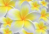 Fotobehang Floral Pattern | XXL - 206cm x 275cm | 130g/m2 Vlies