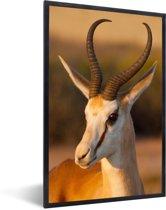 Foto in lijst - Close up van een Gazelle tijdens zonsondergang fotolijst zwart 40x60 cm - Poster in lijst (Wanddecoratie woonkamer / slaapkamer)