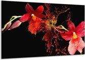 Glasschilderij Art | Rood, Zwart | 120x70cm 1Luik | Foto print op Glas |  F005587