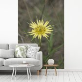 Fotobehang vinyl - Een gele morgenster in een groen grasveld breedte 175 cm x hoogte 260 cm - Foto print op behang (in 7 formaten beschikbaar)