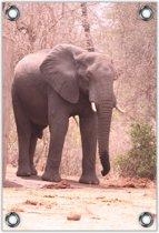 Tuinposter –Olifant  – 60x90cm Foto op Tuinposter (wanddecoratie voor buiten en binnen)