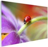 Lieveheersbeestje op een paarse bloem Glas 90x60 cm - Foto print op Glas (Plexiglas wanddecoratie)