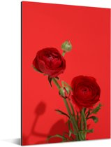 Rode boterbloemen op een rode achtergrond Aluminium 120x180 cm - Foto print op Aluminium (metaal wanddecoratie) XXL / Groot formaat!