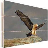 Lammergier landt op een rots Vurenhout met planken 90x60 cm - Foto print op Hout (Wanddecoratie)