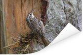Taigaboomkruiper op de schors van een boomstam Poster 90x60 cm - Foto print op Poster (wanddecoratie woonkamer / slaapkamer)