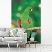 Fotobehang vinyl - Welgevormde edelpapegaai kijkt opzij met een licht onscherpe achtergrond breedte 195 cm x hoogte 300 cm - Foto print op behang (in 7 formaten beschikbaar)