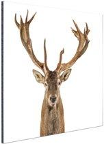 Close-up van een edelhert  Aluminium 90x60 cm - Foto print op Aluminium (metaal wanddecoratie)