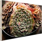 Succulente plant close-up Hout 80x60 cm - Foto print op Hout (Wanddecoratie)