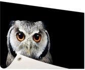 Close-up uil Tuinposter 120x80 cm - Tuindoek / Buitencanvas / Schilderijen voor buiten (tuin decoratie)
