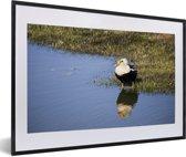 Foto in lijst - Een eider aan de rand van het water fotolijst zwart met witte passe-partout 60x40 cm - Poster in lijst (Wanddecoratie woonkamer / slaapkamer)