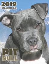 Pit Bull 2019 Calendar (UK Edition)