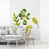 Fotobehang vinyl - Rucola tegen een witte achtergrond breedte 375 cm x hoogte 500 cm - Foto print op behang (in 7 formaten beschikbaar)