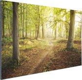 Een weg door het bos Aluminium 180x120 cm - Foto print op Aluminium (metaal wanddecoratie) XXL / Groot formaat!