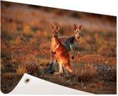 Kangoeroes zonsopgang Tuinposter 200x100 cm - Tuindoek / Buitencanvas / Schilderijen voor buiten (tuin decoratie) XXL / Groot formaat!
