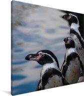 Humboldtpinguïns uitkijkend over het water Canvas 20x20 cm - klein - Foto print op Canvas schilderij (Wanddecoratie woonkamer / slaapkamer)