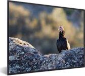 Foto in lijst - Een Californische condor op een rots fotolijst zwart 40x30 cm - Poster in lijst (Wanddecoratie woonkamer / slaapkamer)