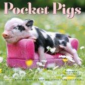 Biggetjes - Pocket Pigs Kalender 2019