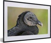 Foto in lijst - Een portret van een zwarte gier fotolijst zwart met witte passe-partout 60x40 cm - Poster in lijst (Wanddecoratie woonkamer / slaapkamer)