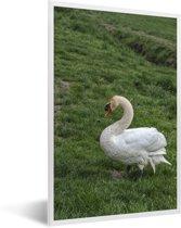 Foto in lijst - Een witte trompetzwaan in het gras fotolijst wit 40x60 cm - Poster in lijst (Wanddecoratie woonkamer / slaapkamer)
