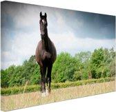 Merrie in een veld Canvas 60x40 cm - Foto print op Canvas schilderij (Wanddecoratie woonkamer / slaapkamer) / Dieren Canvas Schilderij