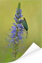 Paarse bloem van de lange ereprijs met een beest erop Poster 120x180 cm - Foto print op Poster (wanddecoratie woonkamer / slaapkamer) XXL / Groot formaat!
