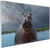 Nijlpaard in het water Glas 90x60 cm - Foto print op Glas (Plexiglas wanddecoratie)