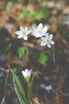 White Woodland Flower Journal
