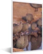 Foto in lijst - Groep helmparelhoenders aan het water fotolijst wit 40x60 cm - Poster in lijst (Wanddecoratie woonkamer / slaapkamer)