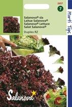 Hortitops Zaden - Salanova - Duplex/ Triplex  RZ