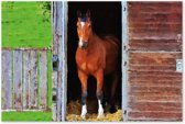 Canvas Schilderij Paard in stal