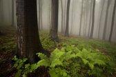 Papermoon Mystic Forest Vlies Fotobehang 200x149cm 4-Banen