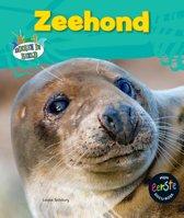 Dieren in beeld - Zeehond
