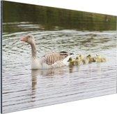 FotoCadeau.nl - Gans met baby's Aluminium 30x20 cm - Foto print op Aluminium (metaal wanddecoratie)